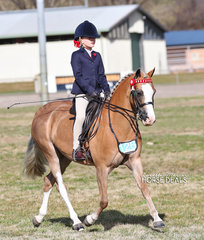 """The EQUISSENTIALS Rider 6 and under 9 years Champion - Elka Torrens, riding """"Rivington Topsy Turvy""""."""