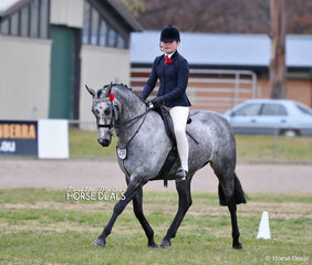 """""""Rosegate High Alto"""" was ridden by Abby Douch to a Top 10 placing in The BARE EQUESTRIAN Small Galloway event."""