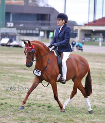 """Jenny Partridge riding """"Bayview Eclipse"""" in The COWGILL FAMILY Large Pony event."""