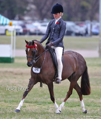 """Working out in The COWGILL FAMILY Large Pony Championship is """"Beckworth Commanding Heiress"""", exhibited by Danielle Malcolm."""
