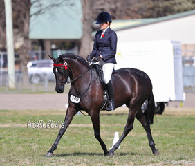 """Top 10 placegetter in The SAMS FAMILY Large Galloway event """"Karma Park Bellagio"""", owned by Naomi Brincau and ridden by Emma Adams."""