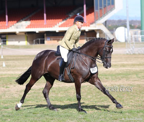 """Melissa Clarke and """"Tallyho Velocity"""" were the winners in The POSEIDON EQUINE Small Show Hunter Hack Championship."""