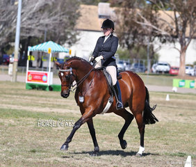 Annabel Mulready riding SLM Orlando, they placed Top 10 in the MDH ROOFING Large Hack over 16hh event.