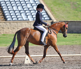 """Isabella McMullen-Hansen and """"Headley Park Xcelebrate"""" placed 3rd in both the Newcomer & Preliminary Pony 12-13hh classes."""