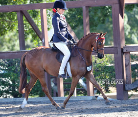 """Merivale Park Silk Swan"" ridden by Emma Adams placed 2nd in the Newcomer Pony 12-13hh event."