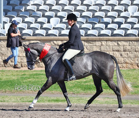 """Louise Ryan's """"Daisy Patch Devine"""" placed 2nd in the Newcomer Hack 15-16hh Championship."""