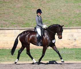"""Davali Blue Label"" won the Preliminary Show Hunter Hack over 16hh, exhibited by Grace Kay."