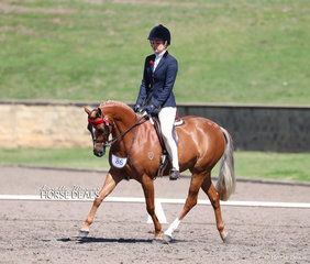"Sarah Turunen's ""Just A Doll Of Kingston"" was Champion Graduate Pony 13-14hh."