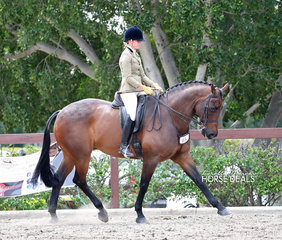 "Tess O'Connor riding ""Falsta D"", Tess placed 3rd in her Rider 18-25 years class & Falsta D placed 3rd in The Diamond Deluxe Horsewear Open Large Show Hunter event."