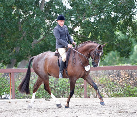 """Danny Jackson and """"Felice De Jeu"""" placed 2nd in the Owner Rider Large Show Hunter Hack event."""