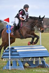"Sarah Boatwood representing Pakenham Pony Club in the Grade 1 riding ""Edenvale Joshua"""