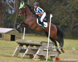 """Samantha Young representing Lilydale & Mooroolbark riding """"Patanga Lodge Cisco Delago"""" in the Grade 2 section 1"""