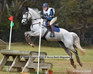 "Bella Warner placed second in the Grade 2 Section 1 reperesenting Main Ridge Pony Club riding ""Remi Royal Star"""
