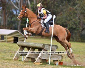 """Winner of the Grade 2 Section 2 Jamie Lee representing Langwarrin Pony Club riding """"Esoteric"""""""