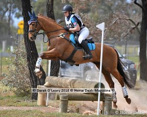 "Paige Leamey representing Lilydale & Mooroolbark Pony Club riding ""Celebrity Jack"" in the Grade 3 Section 1 Cross Country"