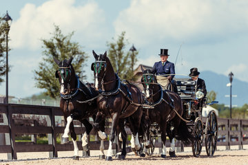 FEI World Equestrian Games... Tryon USA Carriage 1900.Boyd Exell.1900A Carlos / 1900B Celviro./ 1900C Checkmate./ 1900E Zindgraaf.Photo
