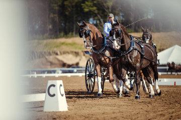 FEI World Equestrian Games... Tryon USA Carriage 1010.Glenn Geerts.1010B Dash / 1010C De Solist./ 1010D Scampolo./ 1010E Zeron.Photo FEI/Christophe Tani..re