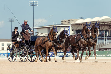 FEI World Equestrian Games... Tryon USA Carriage 1065.Koos De Ronde.1065A Alino / 1065B Cupido./ 1065D Zerino./ 1065E Zimon.Photo FEI/Christophe Tani..re