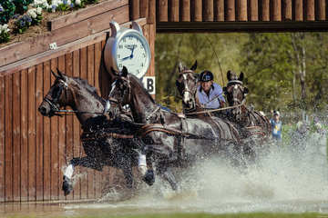 FEI World Equestrian Games... Tryon USA Carriage 1900.Boyd Exell.1900B Celviro / 1900C Checkmate./ 1900D Daphne./ 1900E Zindgraaf.Photo FEI/Christophe Tani..re