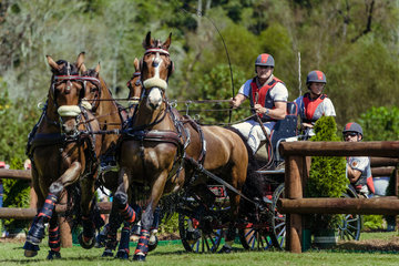 FEI World Equestrian Games... Tryon USA .Chester Weber.1085A Asjemenou / 1085B Boris W./ 1085C First Edition./ 1085D Reno.Photo FEI/Christophe Tani..re