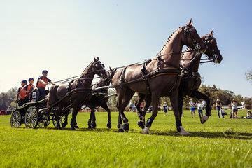 FEI World Equestrian Games... Tryon USA Carriage 1065.Koos De Ronde.1065A Alino / 1065C Emir Morocco./ 1065D Zerino./ 1065E Zimon.NED..Photo FEI/Christophe Tani..re
