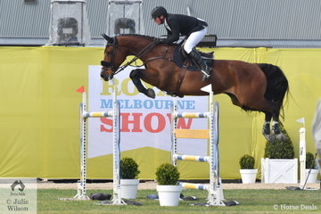 Steven Hill is pictured aboard his talented Conquistador mare, 'Yalambi's Bellini Star during the World Cup Qualifier today.