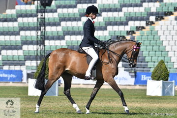 A busy Ebonie Lee rode Ashlea Ryan's, 'Dunelm Something Special' by Dainhill Octave to win the class for Novice Pony 13.2-14hh and go on to claim the Best Novice Large Pony award.