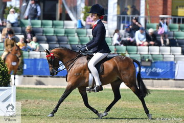 L and L Smith's nomination, 'Brayside Miss Divine' took second place in the class for Open Pony 11.2-12hh.