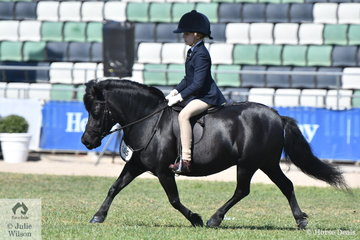 Erin Bowers rode Taylah Arnott's nomination, 'Carreg Wen Athena' to take fifth place in the Shetland Turnout class this morning. This afternoon, Taylah stepped aboard to win the class for Ridden Shetland 10-10.2hh and claim the Ridden Shetland Championship.