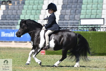 Annique Smith is pictured aboard her up and going, 'Lodge Park Stella' during the Shetland Turnout class this morning.