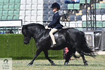 Annabelle Richardson rode her mother, Emma's wonderful, 'Oak Park Paramount' to take fourth place in the Shetland Turnout class this morning.