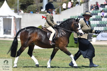 Willow James rode Megan James' delightful Nattai bred Welsh Mountain Pony, 'Dallu Ambrose' to fourth place in the class for Show Hunter Leading Rein Pony 12hh and Under.