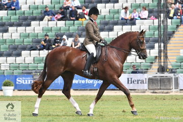 Always in the money, Rachel Wessel is pictured aboard her impressive Royal Hilt mare, 'Bella Rossa' that amongst other prizes took second place in the class for Show Hunter Mare Over 15hh.