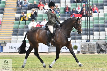 Abby Heffer rode her lovely Royal Hit mare, 'AKS Rumour Has It' to win the class for Show Hunter Mare Over 15hh.