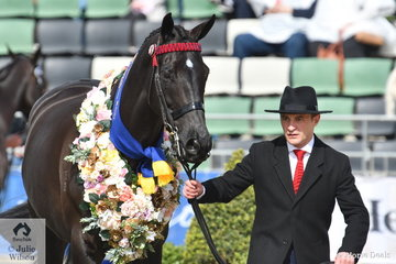 Jumps jockey, Tom Ryan did the honours with Jemima Draper, 'Da Vinci Code' and ran away with the Gents section of the Racing Victoria OTT Fashions at the Show.