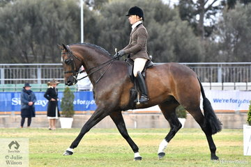 Adam Oliver rode Rebecca Crane's Falsterbo gelding, 'Federer' to win the class for Open Show Hunter Over 16.2hh and go on to be declared 2018 Melbourne Royal Show Champion Show Hunter.