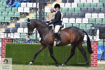Michelle Paynter rode her very well performed, 'DP Amazing' to win the class for Gelding Over 16hh.