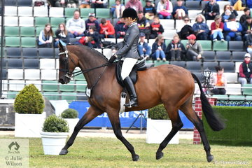 Catherine Neill made Top Ten in the prestigious Pope Cup class riding her impressive Zabeel gelding, 'SLM Mercedes'.