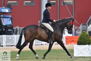 Greg Mickan rode Alyssa Giustozzi's, 'Harlow' to take fifth place in the class for Open Hack 15-15.2hh. A little later the owner stepped aboard to take second place in the class for Hack Gelding 15-16hh.