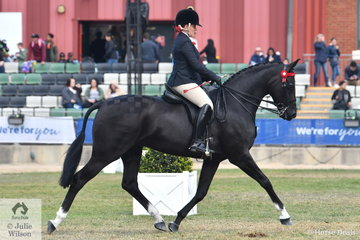 Briony Randle is pictured aboard Martine Duncan's beautiful and super moving, 'Santa Fe' by the imported German stallion, San Jose.  They took second place in the class for Open Hack 15-15.2hh and first in the Mare class.