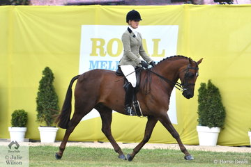 Brynie Lee rode the Romsey Park, Di McDonald and Tony Bayley nomination, 'Dunelm Icon' to win the class for Show Hunter Galloway 14.2-15hh.