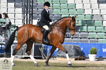 Former Garryowen winner and show horse and pony producer, Sarah Love enjoys some action in the hunting field. Representing the Murray Valley Hunt Club, Sara rode Terry Cooper's, 'TC Bobbie' to take fifth place in the class for Heavyweight Hunter Shown In Saddle.