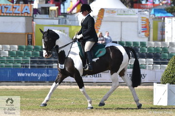 Well known and successful showing identity and keen huntswoman, Fiona McIntyre representing the Barwon Hunt Club rode her eyecatching, 'Opinion' to win the class for Medium Hunter Shown In Saddle and went on to claim the award for Champion Hunter On The Flat.