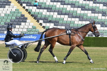 'The Noble Steed' driven by Amanda Mahncke and exhibited by Team NYSS took second place in the class for Standardbred Turnout Driven in Any Vehicle.