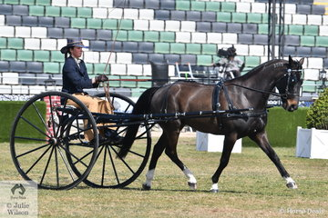 Kylee Paull drove her 'Whiskey Business' to win the class for Standardbred Turnout Driven In Any Vehicle.