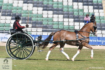 Well known and successful harness exhibitor over many years, Elsa Avery drove the Avery Family's, 'Crosswynds Our Brenin' to win the class for Jinker/Buggy Turnout Over 14hh.