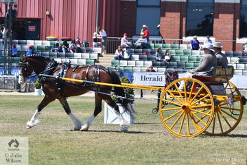 Experienced man about horses, John Mullinger drove his, 'Amazing Grace' to win the class for Novice Delivery Horse.