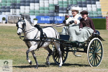 Successful harness exhibitor, Maureen Pengelly drove her  own and Kerry Buckleigh's, 'Goldon Park Lollipop' to take third place in the class for Jinker and Buggy Turnout 10.2-14hh.