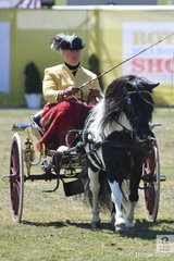 Fiona Wilson drove her own, Norni Wright and Corinne Collins', 'Tara Park Phoenix' to win the class for Jinker/Buggy Turnout 10.2hh and Under.