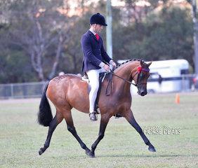 "Leah Walsh's ""ACM Sophia"" was a class winner in the pony ring, ridden by Michael Glenn."
